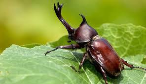 2 Arti Kumbang Masuk Rumah Malam Hari dan Jenis Hewan Lainnya