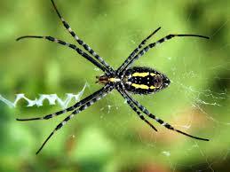 mimpi membunuh laba-laba